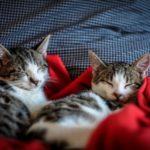 猫が2匹毛布に包まって気持ち良さそうに寝ている