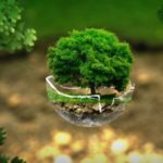 エコをイメージする緑豊かな木