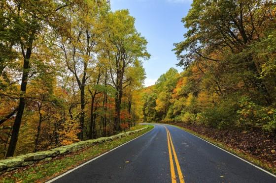 紅葉した木々の間にある山道